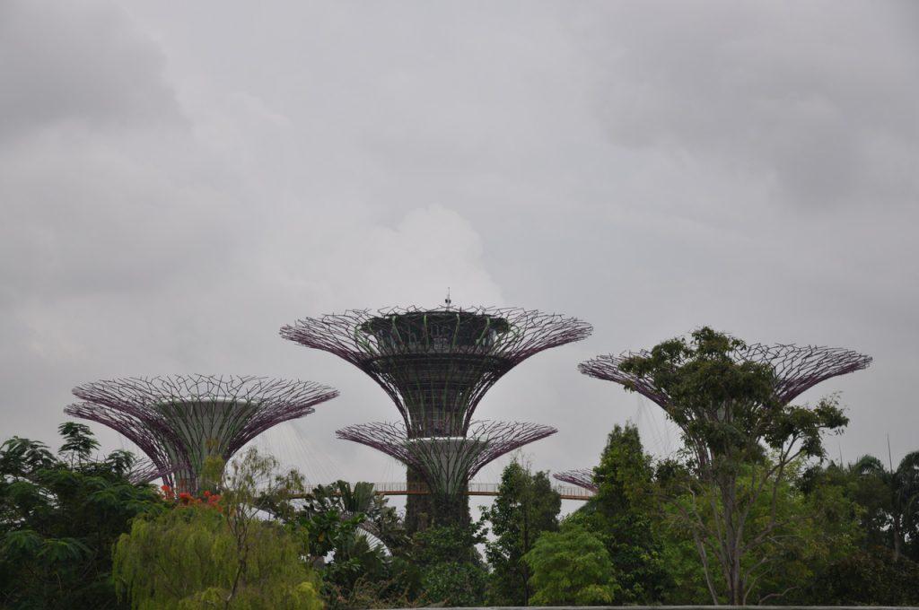 Chmury nad SuperTree Grove w Singapurze