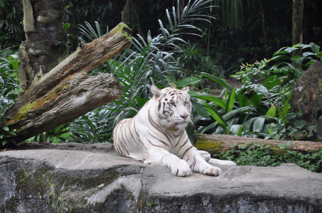 Wycieczka do zoo w Singapurze